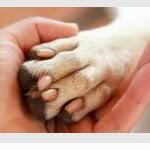 Séance de manucure canine