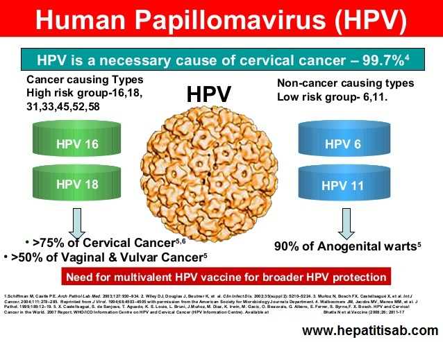 What is Cervical High RIsk Human Papillomavirus (HPV)