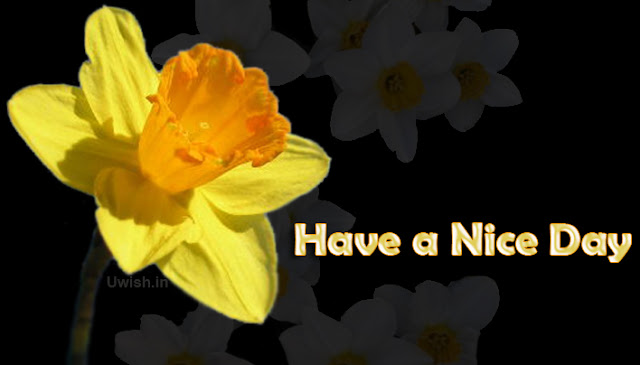 Have a Nice day, everyday E greeting cards and wishes.