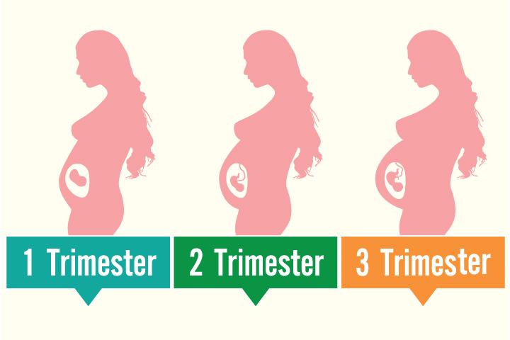 Apakah yang dimaksud trimester