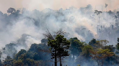Amazon fires: Seven countries sign forest protection pact