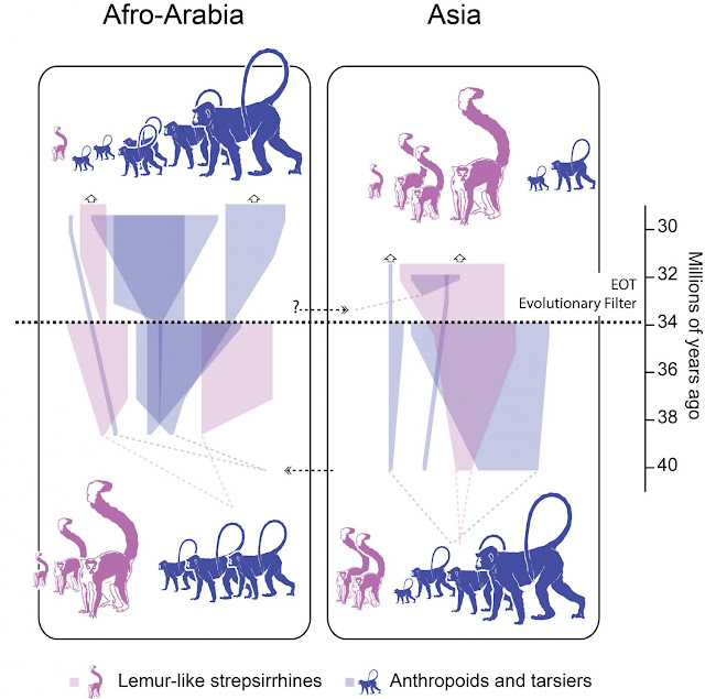 Six new fossil species form 'snapshot' of Asian primates stressed by ancient climate change