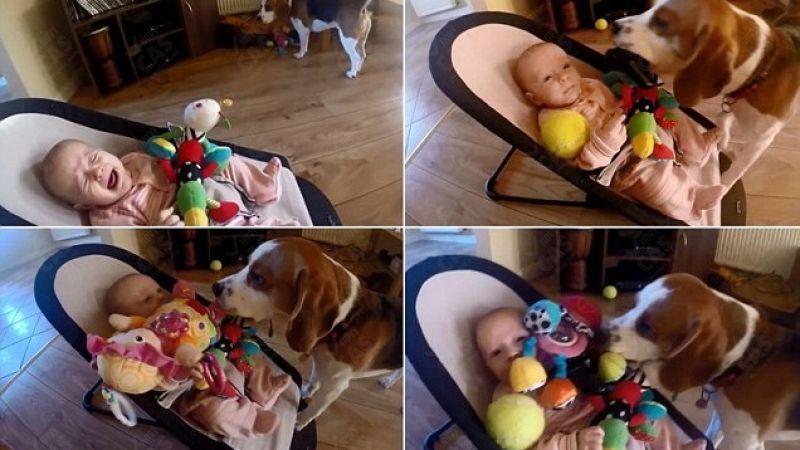 Ο σκύλος παίρνει το παιχνίδι του μωρού, όμως μετά του ζητά συγγνώμη με τον δικό του τρόπο! (βίντεο)