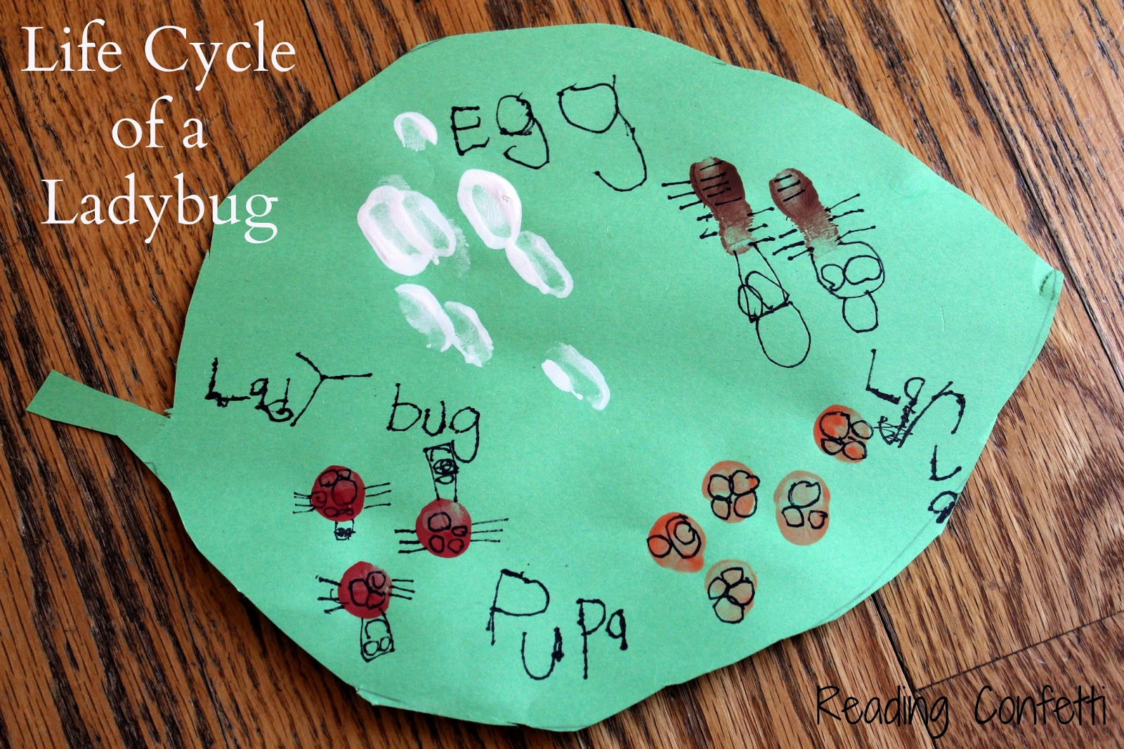 Fingerprint Lady Bug Life Cycle Craft Reading Confetti