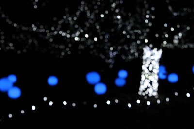 white and blue tree bokeh