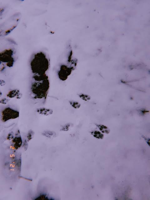 walking dog in a winter wonderland