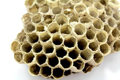 Side Effects and Reviews of Bee Propolis