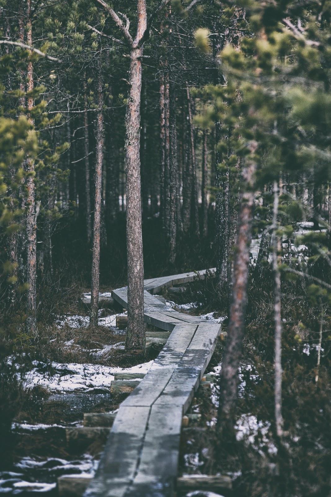 Riihimäki, visitfinland, suomi, experience, travel, valokuvaaja, Frida Steiner, visualaddictfrida, Hatlamminsuo, luonto, luontokuva, nature, naturephotography