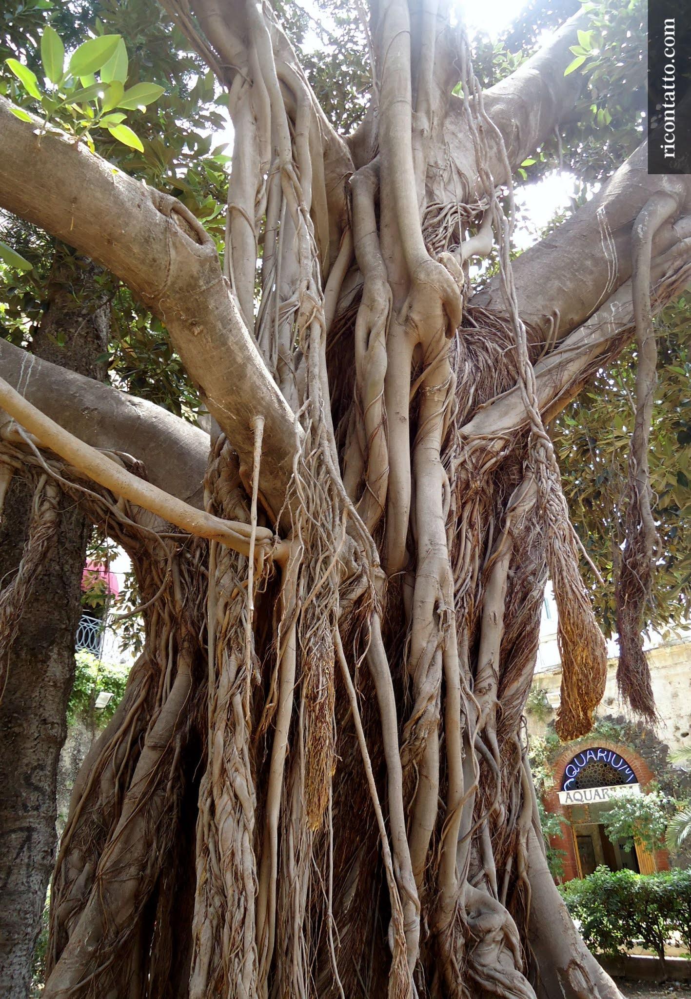 Siracusa, Sicilia, Italy - Photo #06 by Ricontatto.com