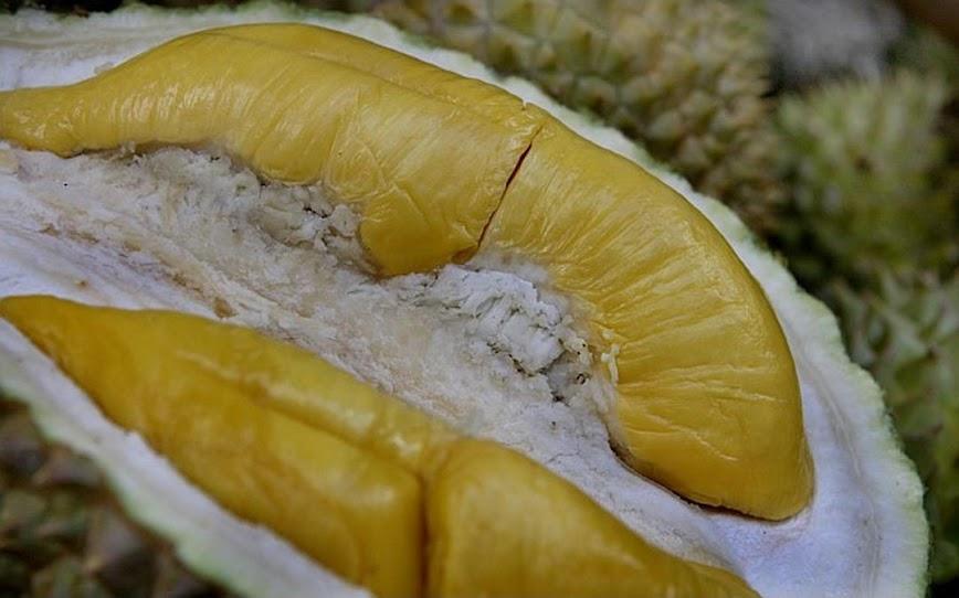 Bibit Durian Musangking unggul Sumatra Barat