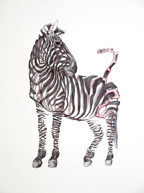 11-Zebra-and-Snake-Jaume-Montserrat-Illustrations-of-Ribbon-Animals-in-Emptyland-www-designstack-co