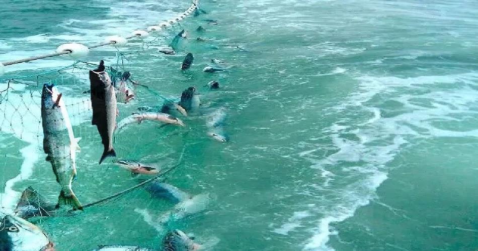 Longline Fishing method, technique