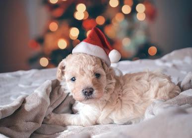 white dog santa hat christmas tree