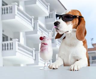 yeşillikler • köpekler • yapraklar • sevinç • Park • oyun • bahçe • köpek yavruları • çift • yürüyüş • beyaz• bir çift • Labrador • İkili • arkadaşlar • çalılar • iki • Av köpeği • iki köpek • av köpeği • iki yavru