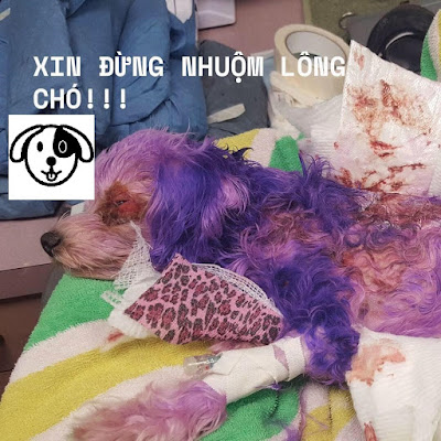 Nhuom long cho