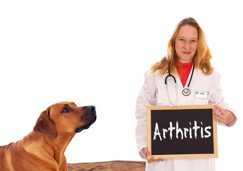 pet  Artrite em cães Causas e Tratamento