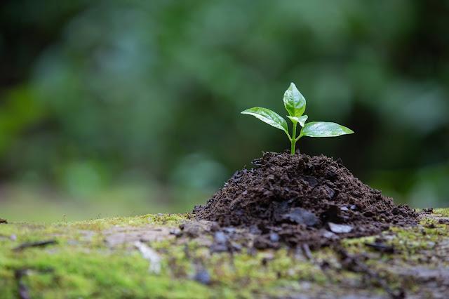 اهمية النباتات وطرقة المحافظة علية
