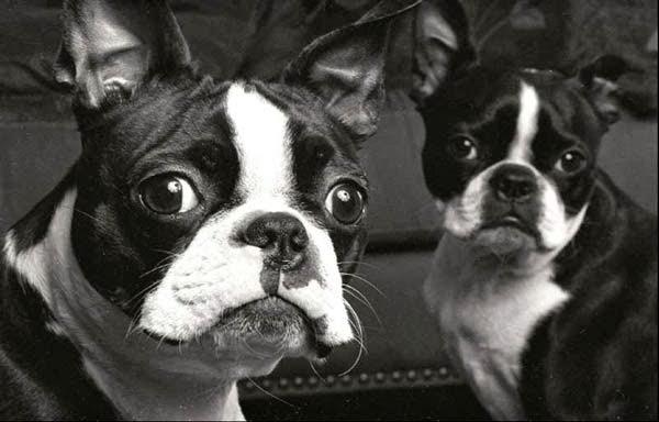 Mira razas de perros q...