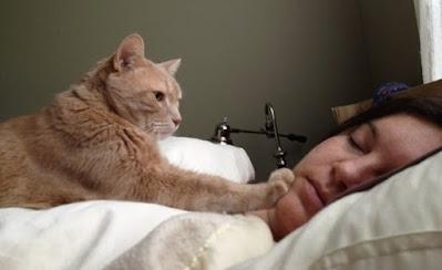 ¿Por qué tu gato te despierta a la misma hora todos los días?