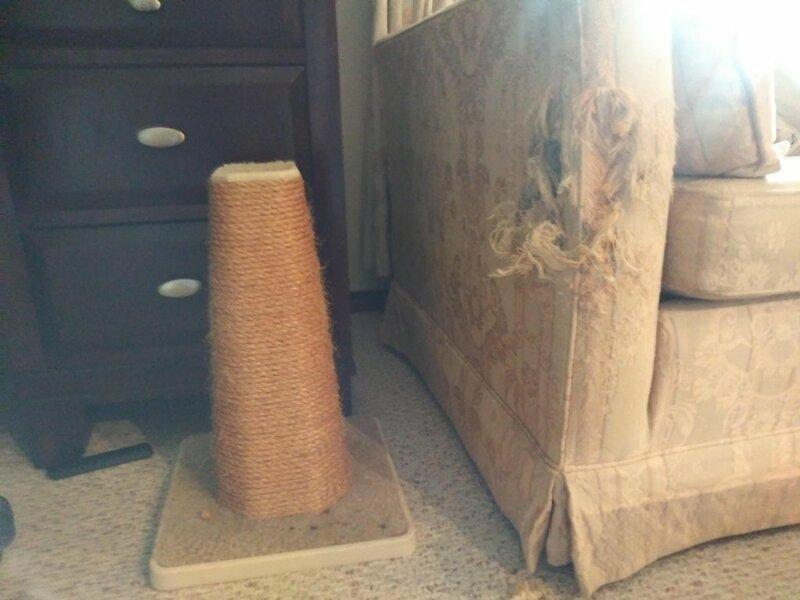 gatos-muebles