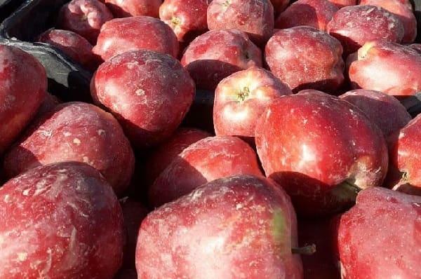 التجارة الداخلية شراء أصناف ونخب التفاح بنسب متساوية