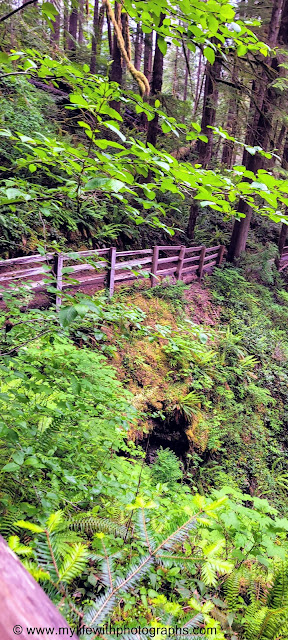 Nice wooded rails on the trail up to Marymere Falls