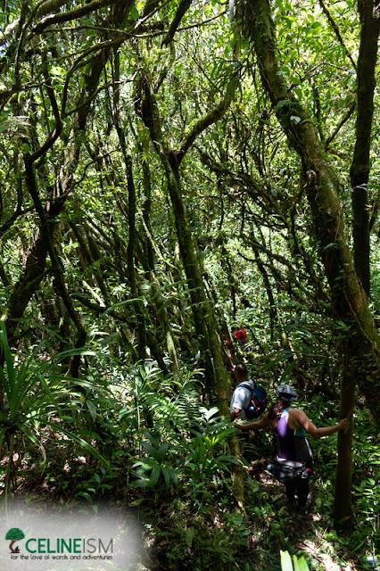 mt hibok hibok trail
