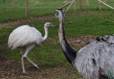 Tattershall Farm Park - A review - rhea