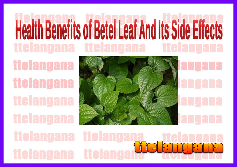 Health Benefits of Betel Leaf And Its Side Effects