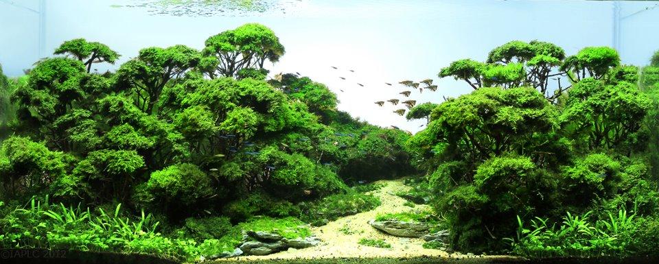 Bể thủy sinh rừng đạt giải nhất cuộc thi thủy sinh thế giới IAPLC 2012, bạn có thể dùng lũa xương
