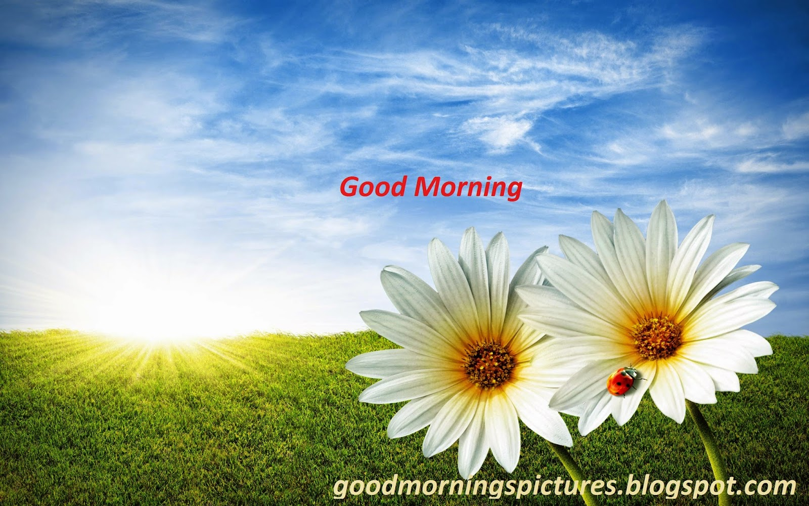 Good Morning Beautiful Photos Download : Beautiful good morning images free download azquotes