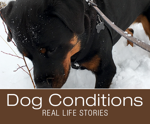 Dog Conditions - Real-Life Stories - Cookie's Leaks New Theory (Dog Incontinence)