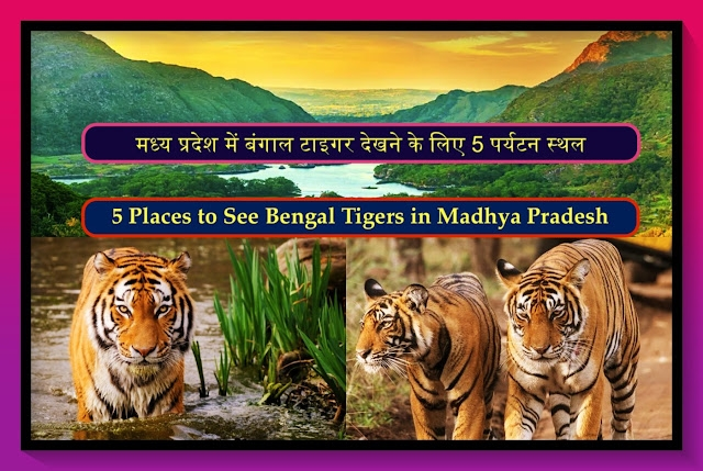 Tourist Places to See Bengal Tigers In Madhya Pradesh