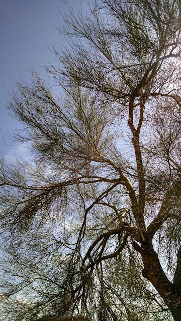 desert, sonoran desert, amy myers, photography