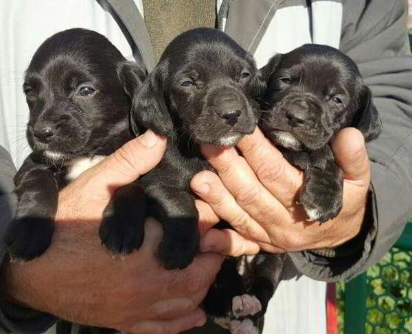 cachorros de talla pequeña mediana