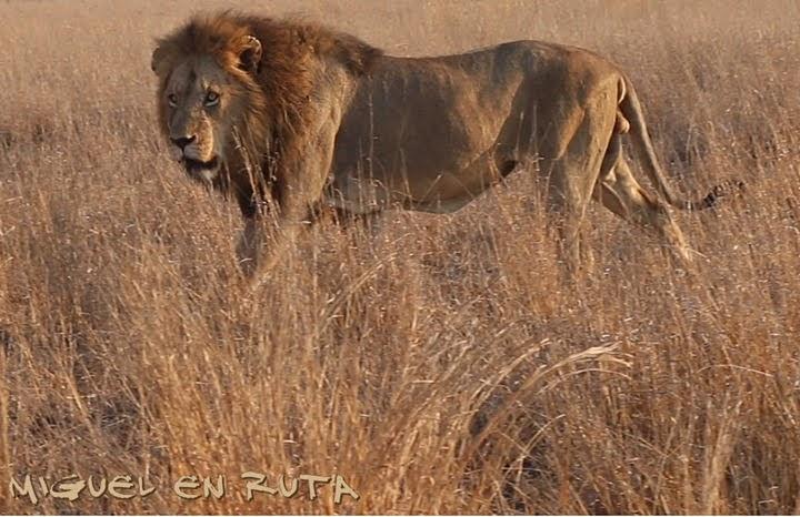 León en S-100, Kruger