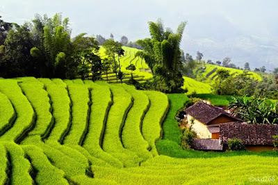 vietnam vacations -Discover Mai Chau Pleteau