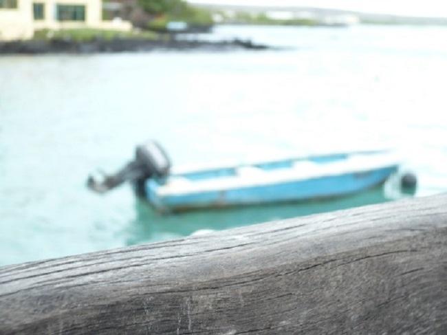 Tiranos en las Galápagos