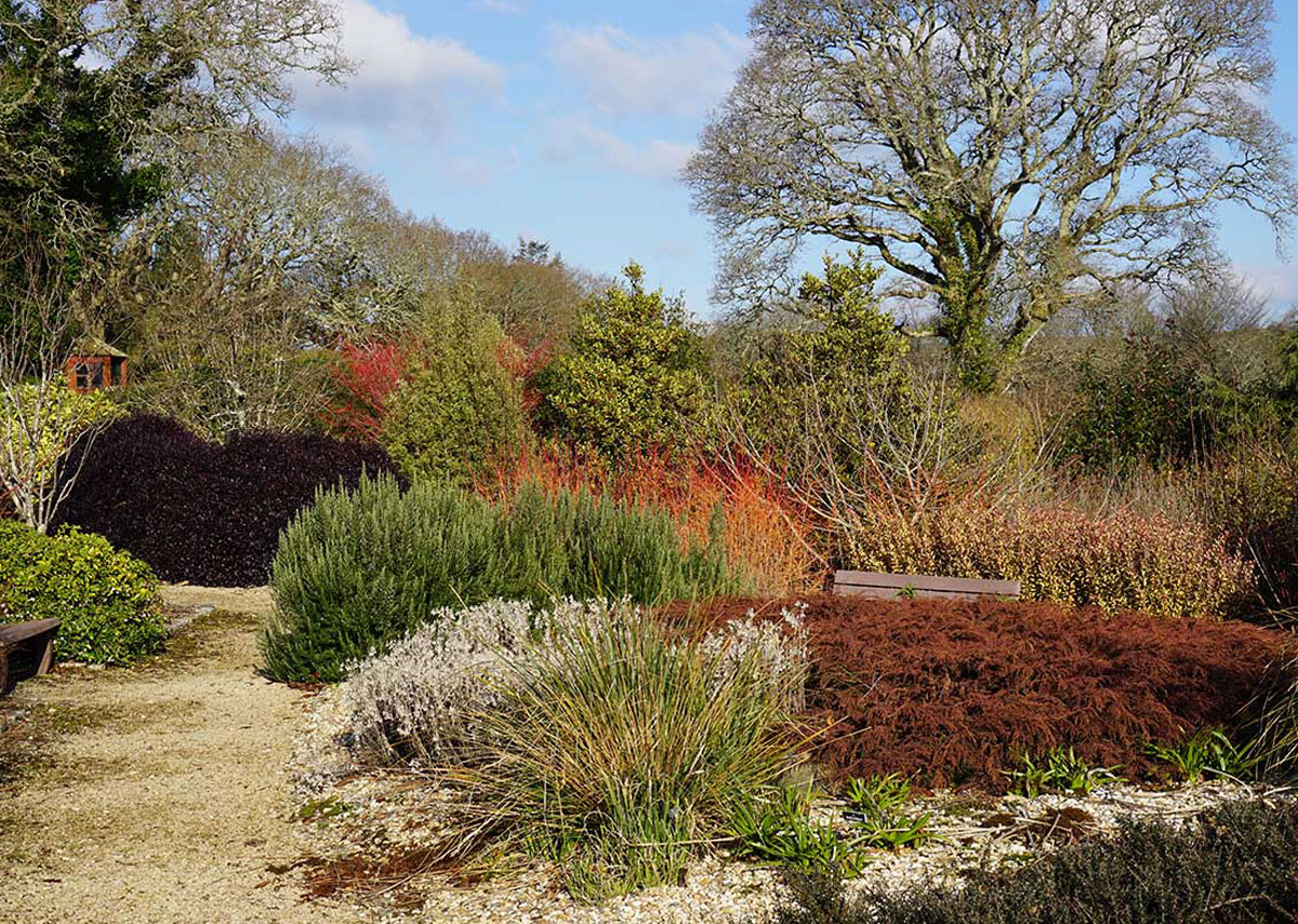 Winter colour at Pinetum Gardens, Cornwall