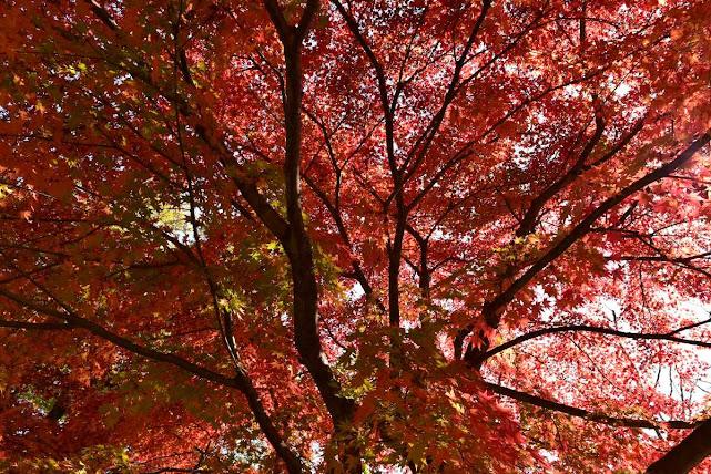 城峰公園の紅葉2