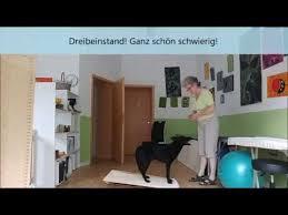 fisioterapia para cães