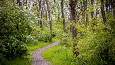 Wallpaper free forest, grass, path, trees, shrubs