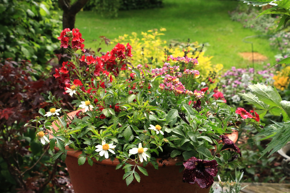 Summer Bedding Plants, Pictures And Names Of Bedding Plants