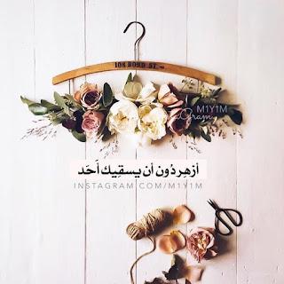 صور زهور جميلة
