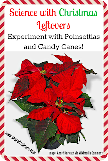 science activities poinsettia candy cane mints kids activities