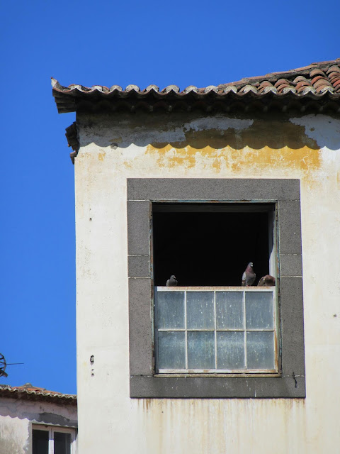 abandoned house with pigeons in the window