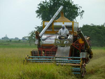 Reiserntemaschine Thailand