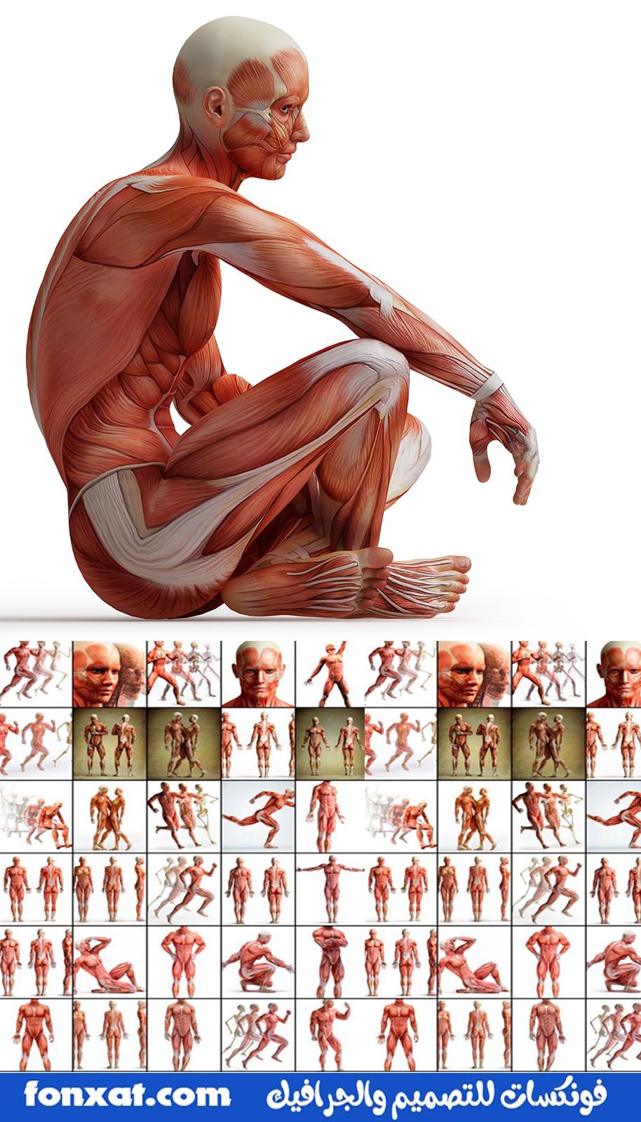 Anatomy.Concept.jpg