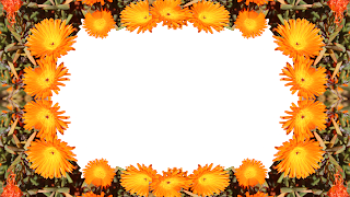 Moldura orange flower - 1 foto png