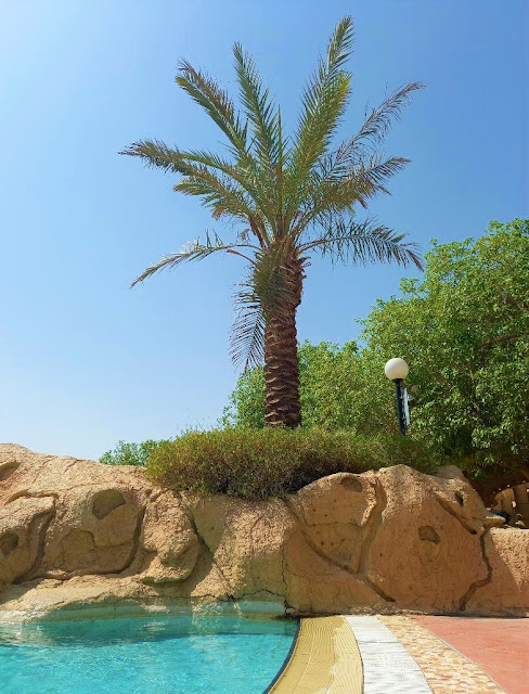 Pool and palm tree on a western compound in Riyadh